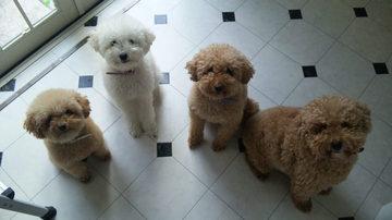 犬4匹見上げる.jpg
